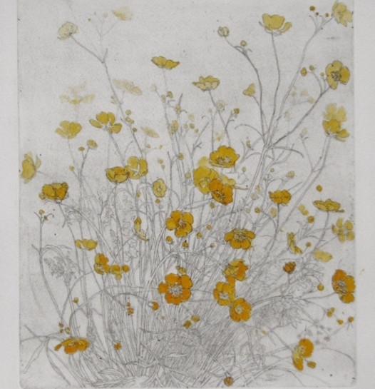 Mary cossey Buttercups in a Field copy.JPG