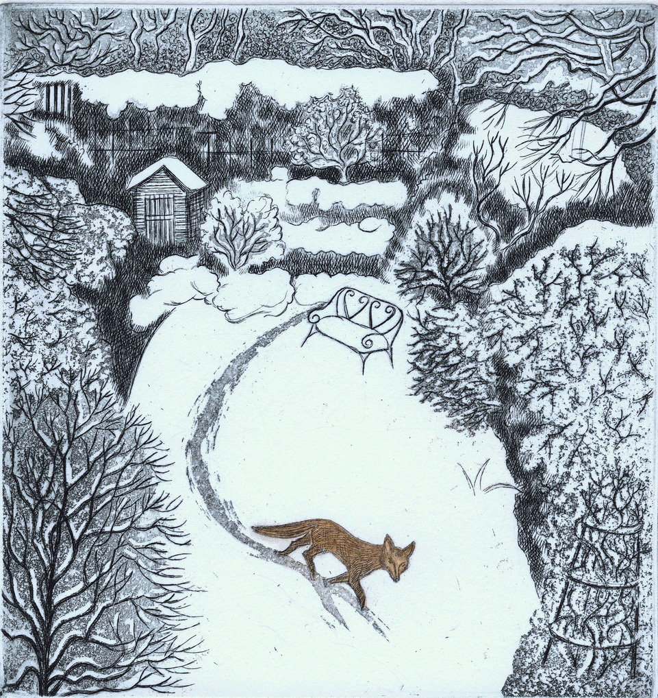 Fox in snow Elaine Marshall