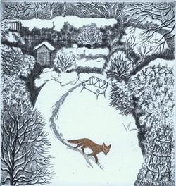 Fox in snow Elaine Marshall
