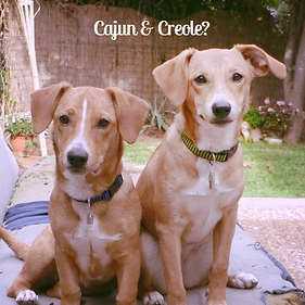 Dog Names Cajun and Creole