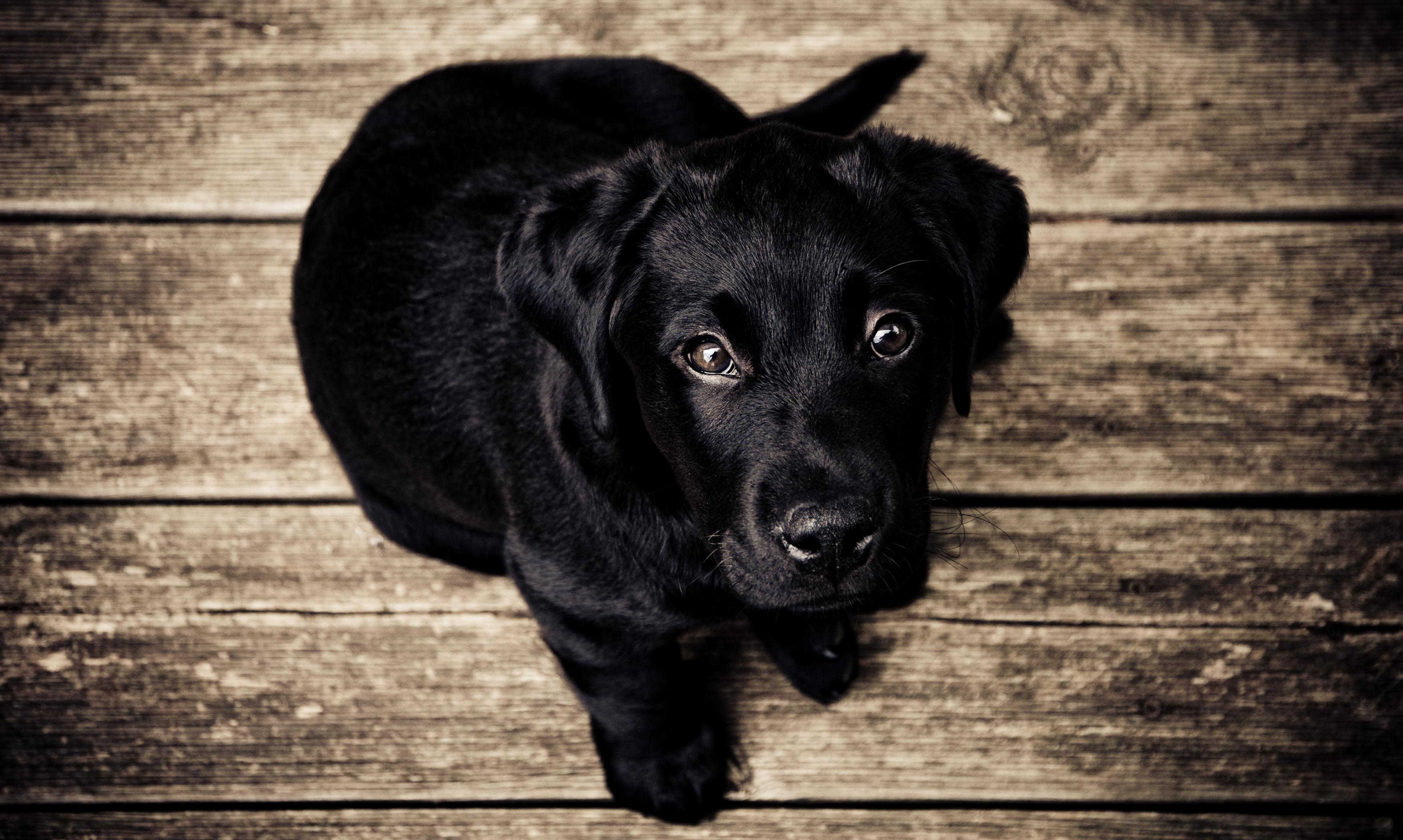 Dog Name Woody