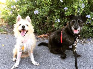 Sophie & Jasper