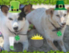Irish St. Patrick's Dog Names
