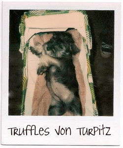 Truffles Von Turpitz