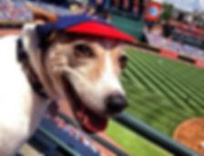 Baseball Dog Names