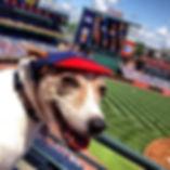 Dog at ball game