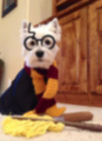 Hairy Potter dog