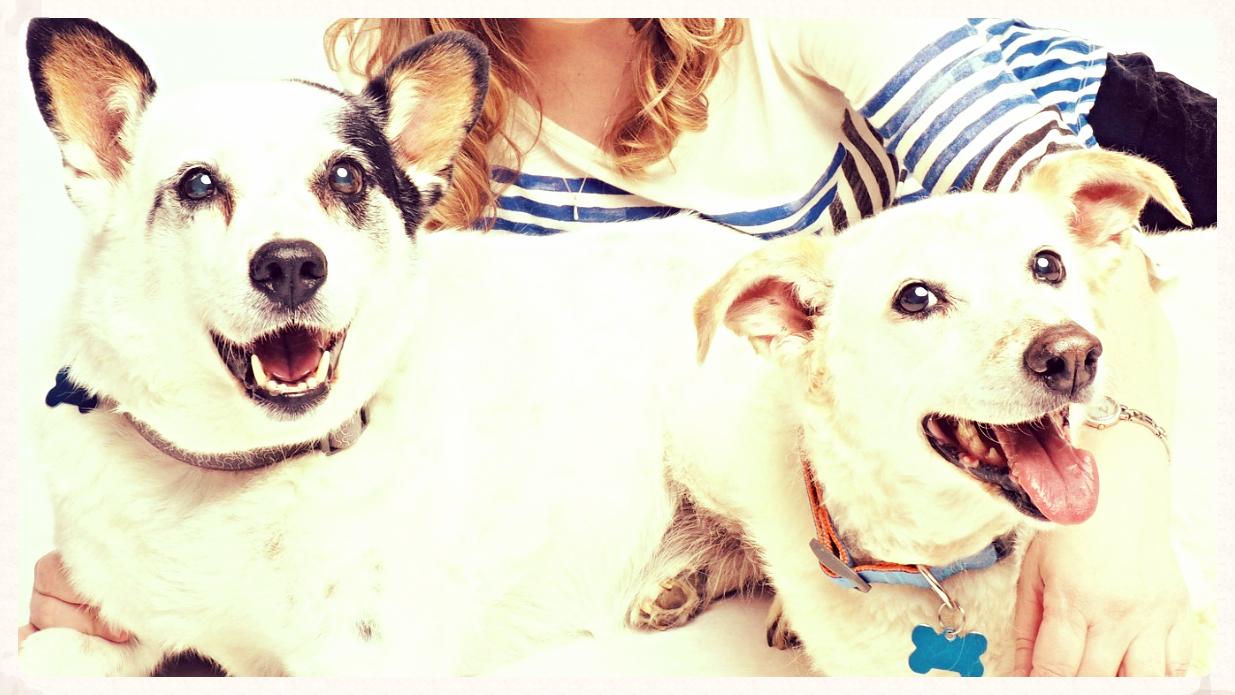Dog Names Daisy Jo and Bud Earl