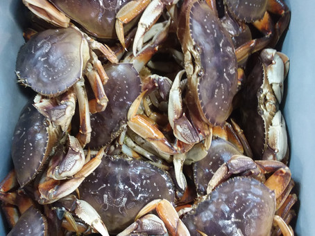 San Francisco Bay Area Crab Season Just Started
