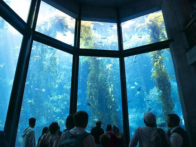 Monterey Bay Aquarium 160106 4
