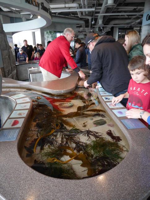 Monterey Bay Aquarium 160106 1