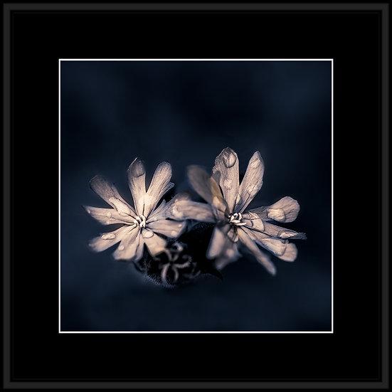 STEPHANE CHERY - DSC08923