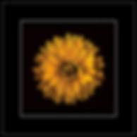 DSC04795-1g.jpg