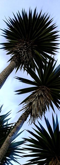 CR-Yucca 12°.jpg