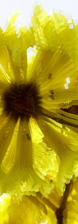 CR-Fleurs jaunes0003bis.jpg