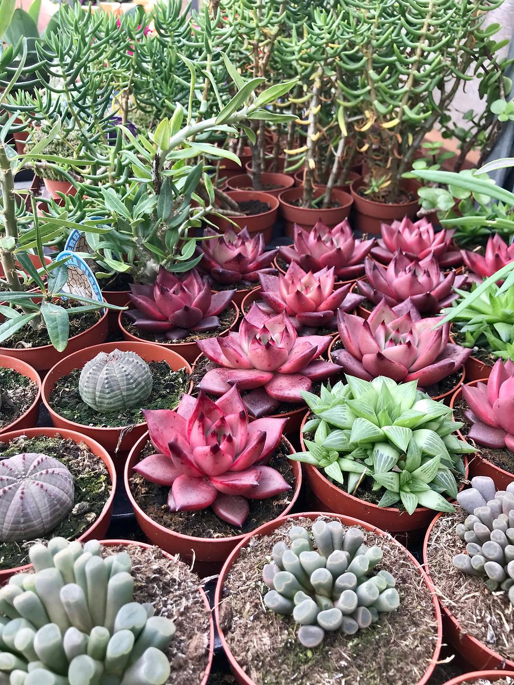 https://cactus-nijar.negocio.site