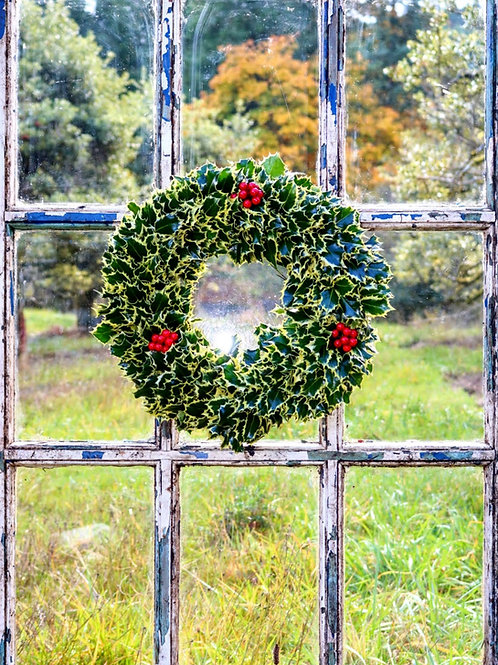 Variegated Holly Wreath