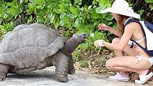 Galapagos Tortoise.jpg