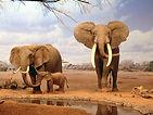 african-elephant-01.jpg