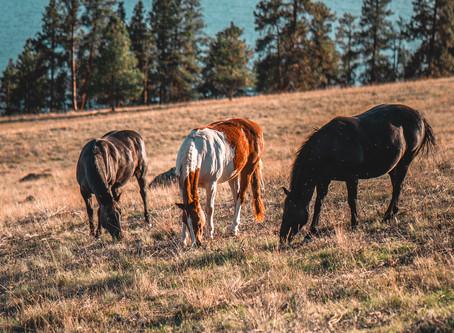 Wild Horse Island - Watch Horses Run on Flathead Lake