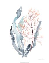 133866FN Sweet Seaweed II.jpg