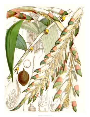 134438Z Tropical Variety I.jpg