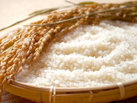[J-Special] 收穫的季節到了!好吃的日本米