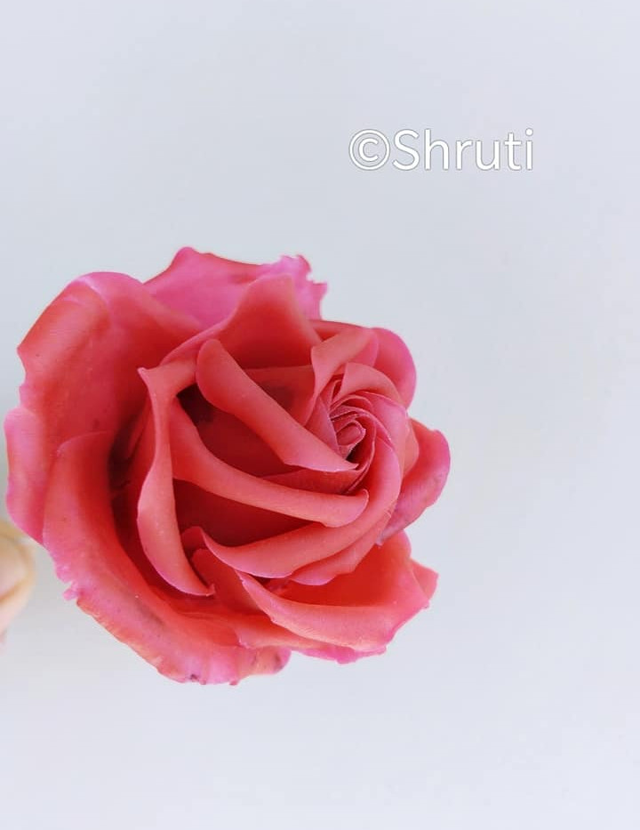 Bean Paste Rose