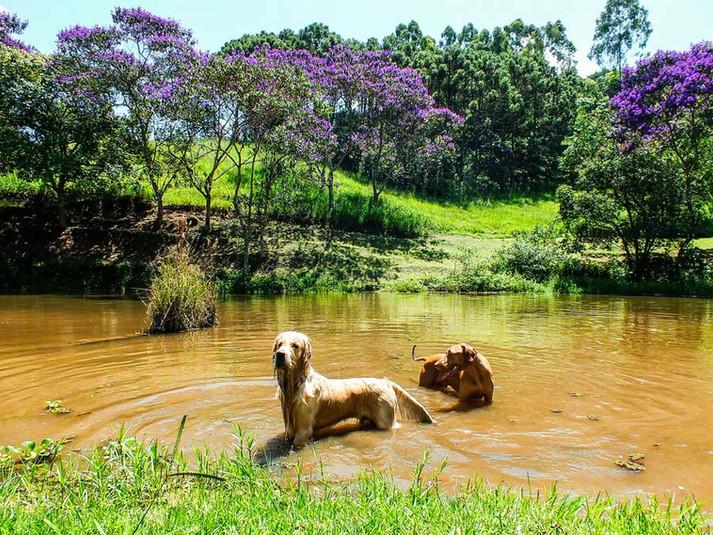 MimoseFocinhos---Resort-Pet-19.jpg