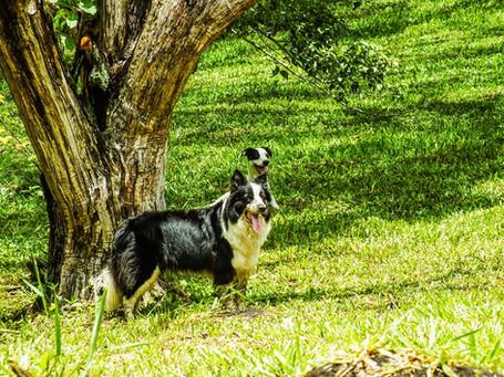 MimoseFocinhos---Resort-Pet-26.jpg
