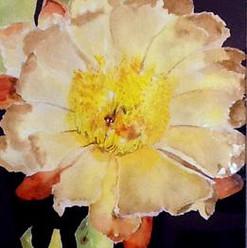 Judy Nelson