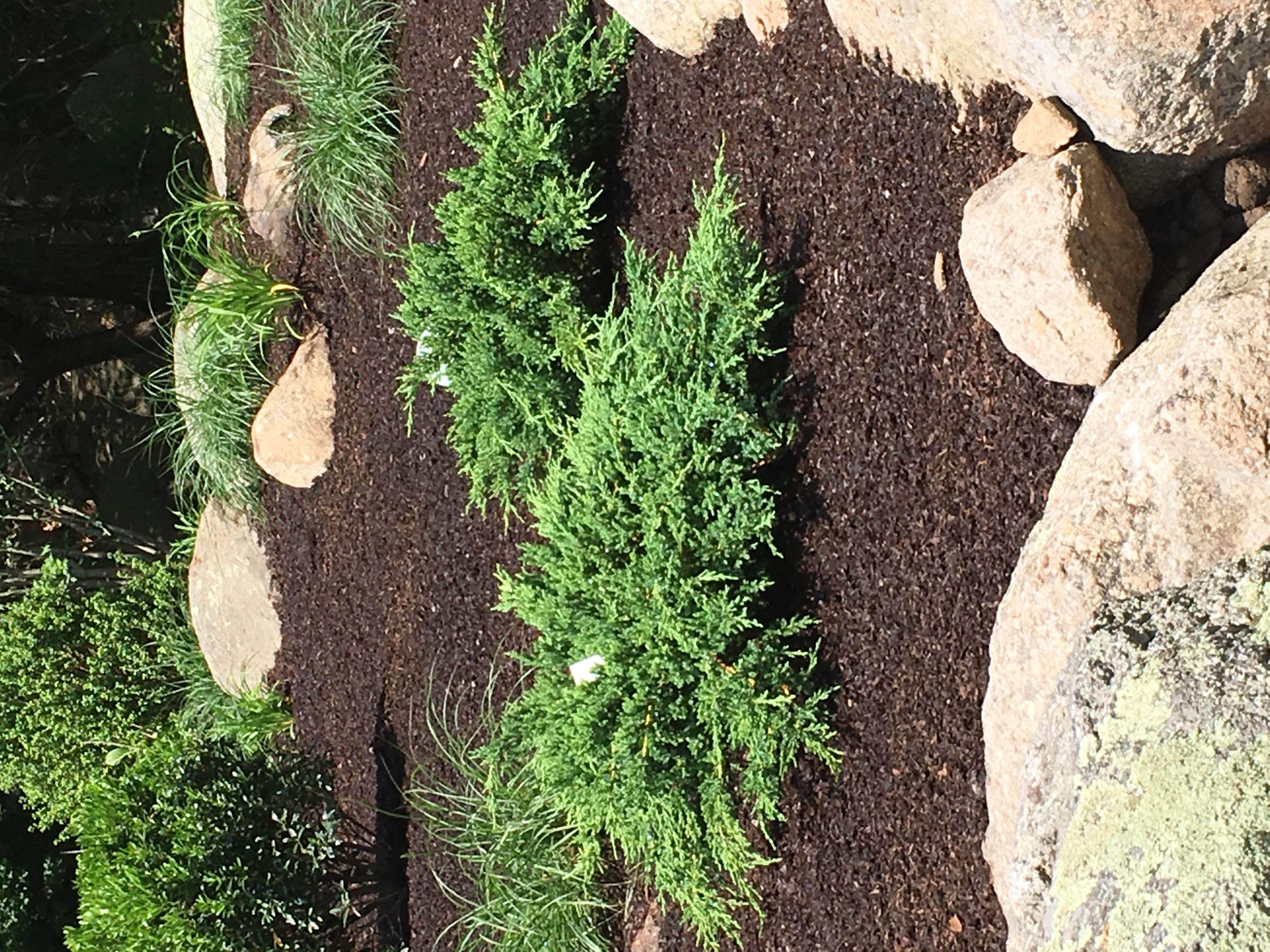 Naturalistic plantings