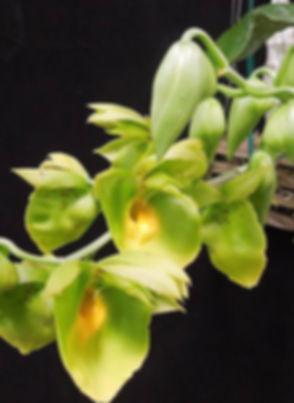 ctsm_orchidglade.jpg