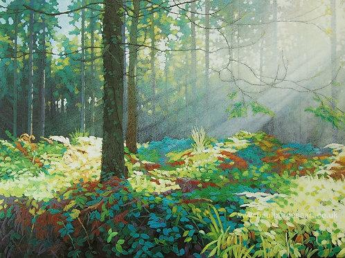 """Forest Dawn 7 - 9"""" x 11.5"""""""