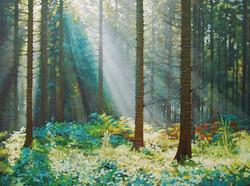 Forest Dawn 6