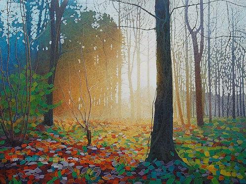 """Forest Dawn 10 - 9"""" x 11.5"""""""
