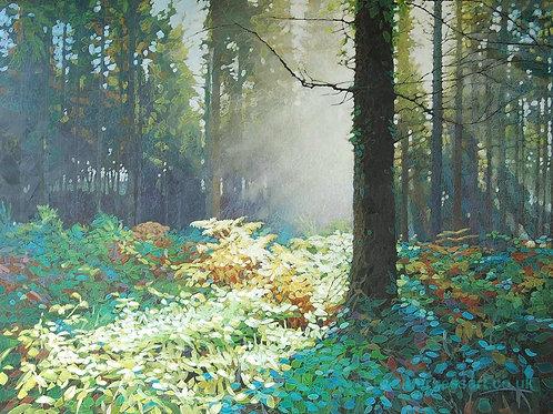 """Forest Dawn 5 - 9"""" x 11.5"""""""