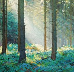 Forest Dawn 4