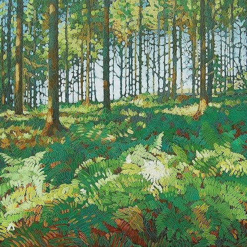 Bracken Wood 2