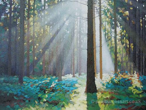 """Forest Dawn 9 - 9"""" x 11.5"""""""