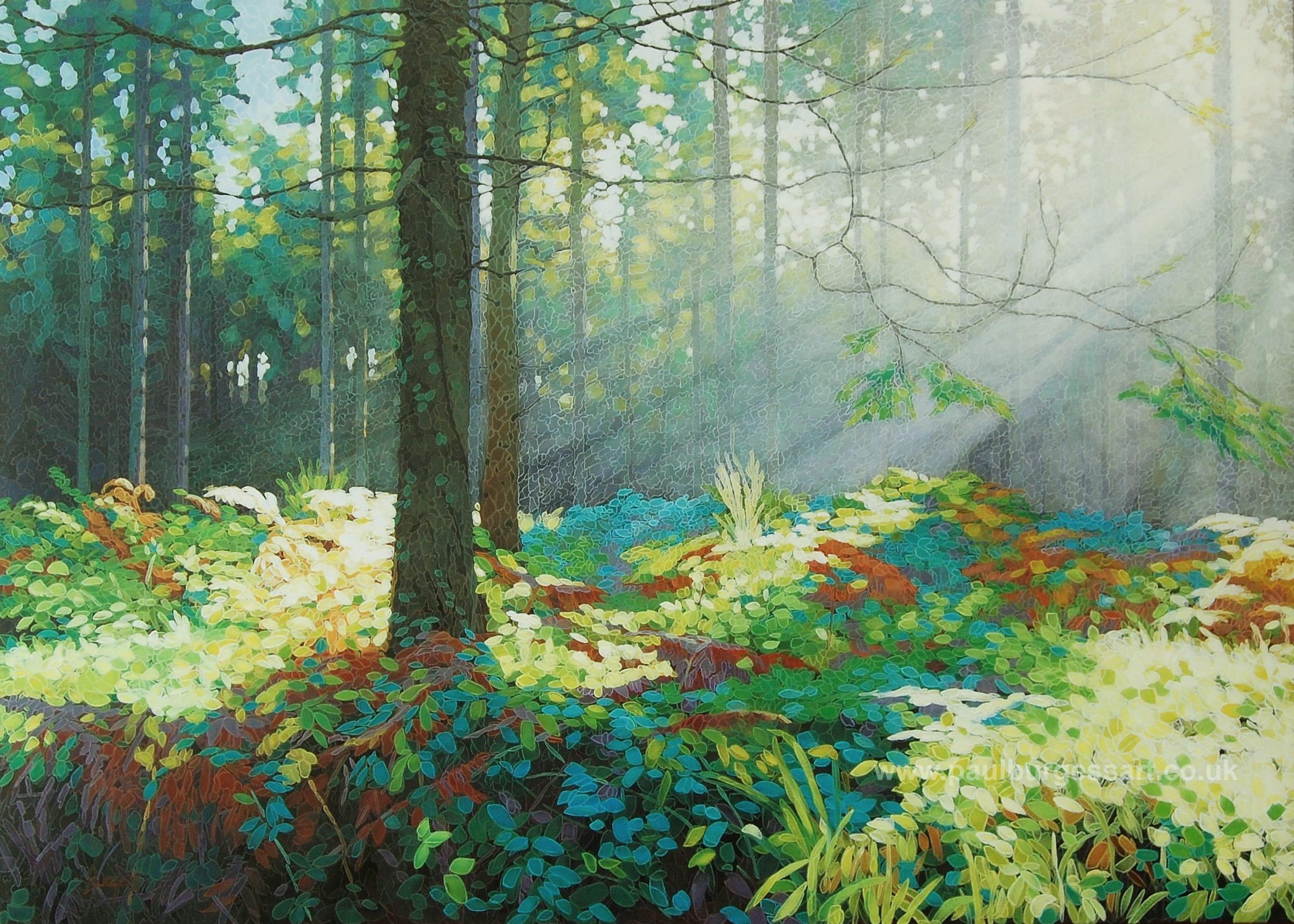 Forest Dawn 7
