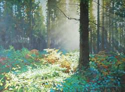 Forest Dawn 5