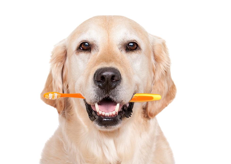 Image result for dog smiling teeth
