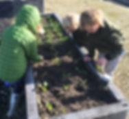 Community garden beds