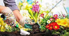 Petit jardinage image.2.jpg