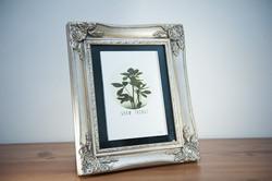 Tupelo Tree Illustration