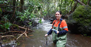 Ecologists study Te Mato Vai intake site streams