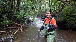 Ecologists study Te Mato Vai intake site streams