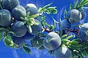 blue-peaches.jpg