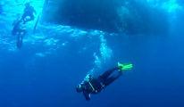 Fantasma Boat te leva para conhecer a vida marinha de Búzios